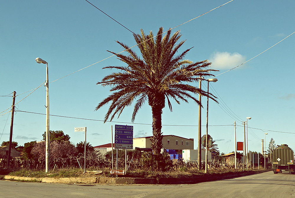 palms at a street in Sicily